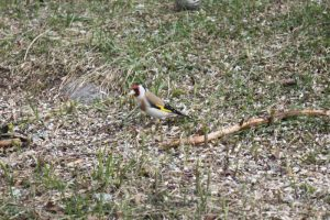 2012-05-12 Fågelmataren